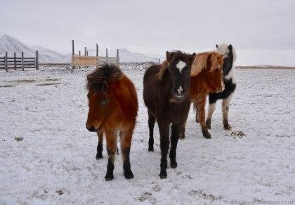 Liður, Ritning, Feikn, Gáfa