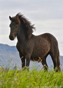 15062018-Áróður-frá-Melaleiti-©AslaugJonsdottir---2